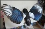 New Wings by CabinetCuriosities