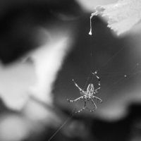 Spider's reprise by HappyStarfish85