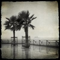 Two Palms and a Boat by TheForestMan