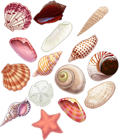 Seashells by the seashore... by sotee