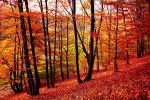 Autumn forest VII by valiunic