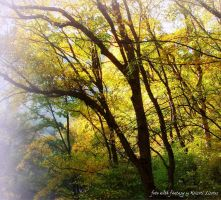 ...in the yellow forest... by lisztikriszti