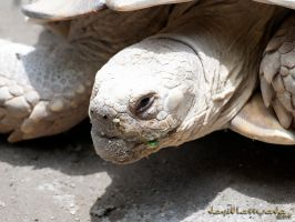 Turtle Face by chanyto