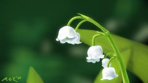 Lilly of the Valley by KLGZ