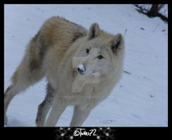 snownose by Twins72