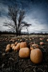 Pumpkins Past - Redux by jnati