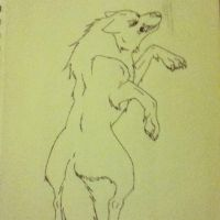 wolf sketch by 01whitewolf