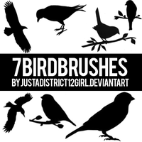 7 Bird Brushes For You! by justadistrict12girl
