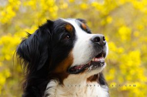 Pretty In Yellow by Wincey