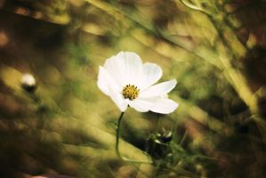 Love is like a flower-you've got to let it grow by BlueColoursOfNature