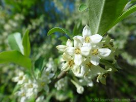 Little Pale Flowers by SnapShot120