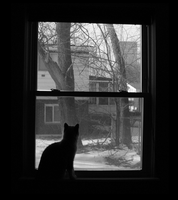 A Window of Opportunity by Aerie-Disturbed