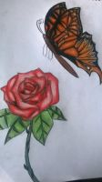 butterfly and rose by ccunniffe