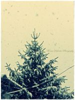 Snow snow over pine by moonik9
