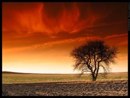 Tree of fire by mjagiellicz