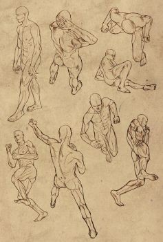 Hard perspective anatomy references for males by SirWendigo