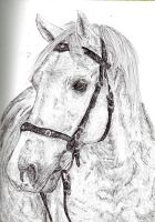 Grey Horse Drawing by lorni3