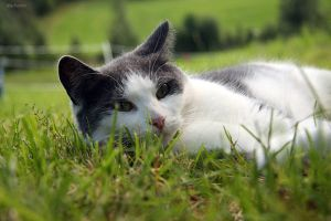 Cat in Summer by CanonIda