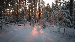 Winter forest by Antz0