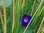 Hiding in Chives by bananasugar67