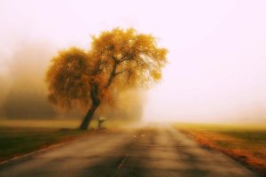the road less traveled by NickJames121
