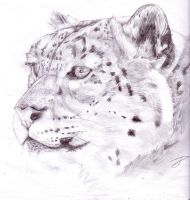 Snow leopard head-pencil by vamphawkeh