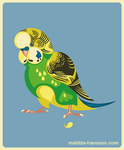 Budgie by NorthWing