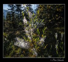 Bejeweled 2 by Phototubby