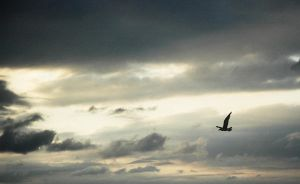 Sky and a Seagull by Tom-Mosack