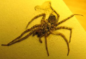 Book Spider Remains by AFlatEarth