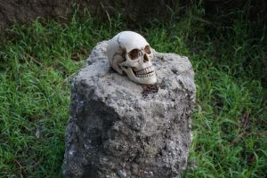 Human Skull 011 - HB593200 by hb593200