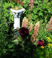 Sundial And Roses by Forestina-Fotos