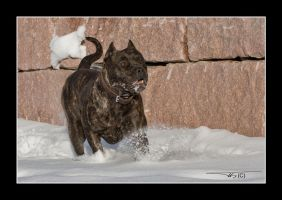 Oris playing in the snow... by OrisTheDog