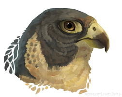 Peregrine Falcon by MoonlightLyanti