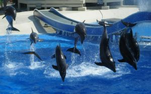 SeaWorld - All Together Now by kngdmhrts2