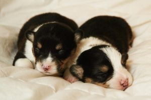 little puppies by 3thehardway