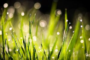 Dew by sampok