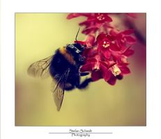 .Bumble Bee. by LastAutumnShade