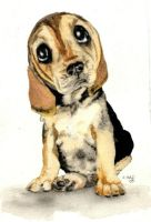Bulging Eyes Basset Puppy by theancientofdays