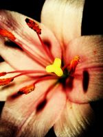 Flower by nicks-mou