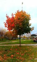 Colorful Autumn by Angelus-Fallen