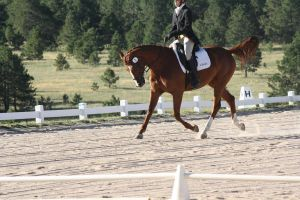 Dressage Stock 1 by kquint