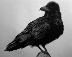 Crow by emishka