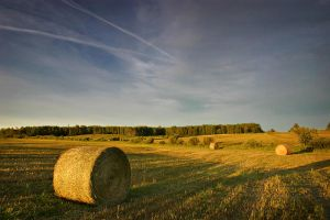 Bales of the Black Cr Lowlands by tfavretto