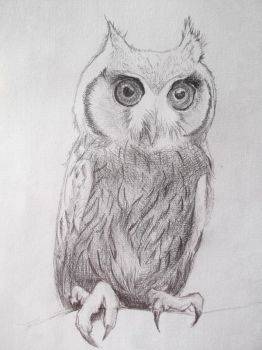 Owl by hxpt