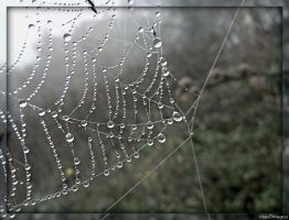 Web Of Dew by VasiDgallery