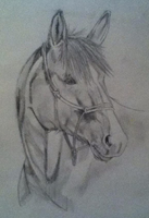 Horse Drawing by nath2897
