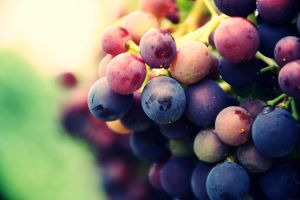 Grapes by Marjobsoleta