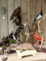 Taxidermy work of last week! by Museumwinkel