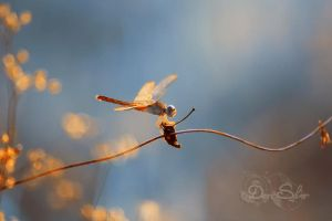 Cool dragonfly by diensilver